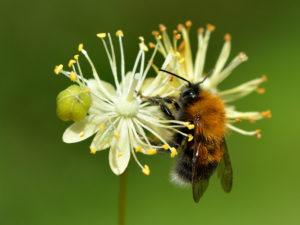 Bienchen mit Blümchen